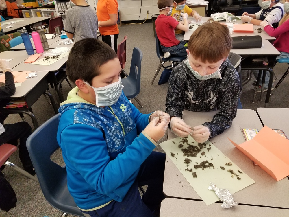 Owl Pellets & Food Chains